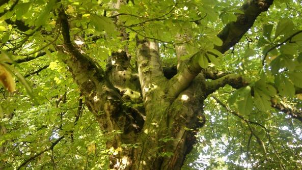 Čarovné stromy v parku