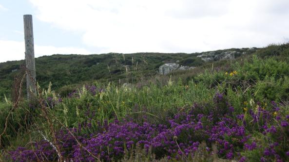 Podnebie sa postaralo o úchvatnú prírodnú skalničku